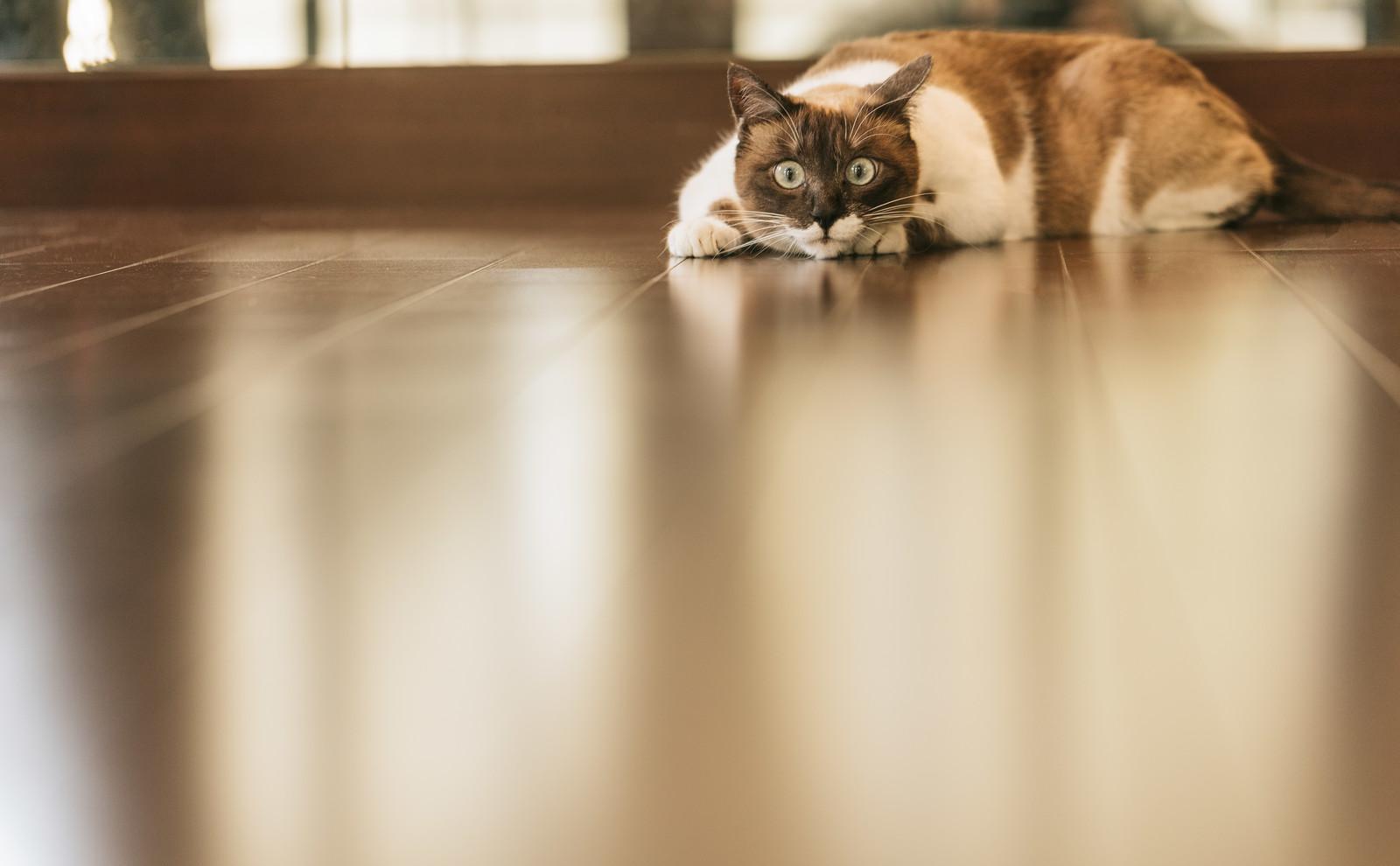 cat9V9A8980_TP_V